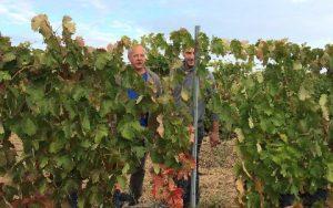 Cata de uvas en Vinedos Alonso del Yerro