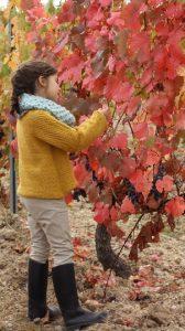 Cata de uvas en Alonso del Yerro