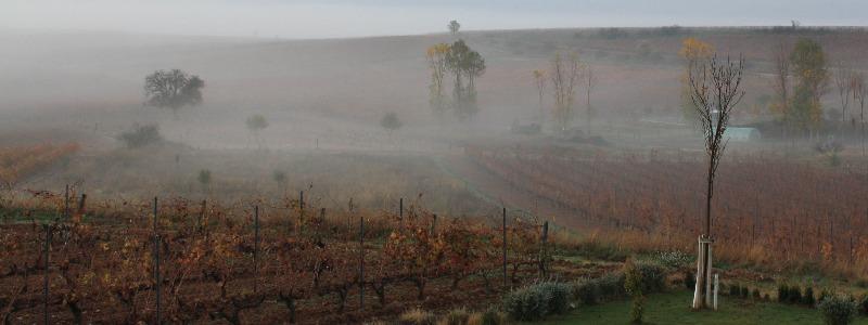 El otoño en Alonso del Yerro